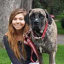 Phoenix - Brindle Female American Mastiff