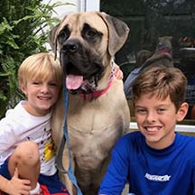 Peaches - Fawn Female American Mastiff
